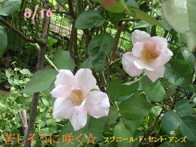 DSCN8159a_20120831143634.jpg