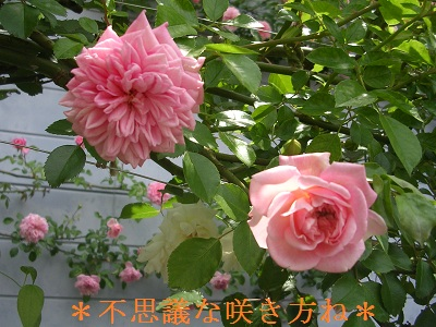 DSCN8166a.jpg