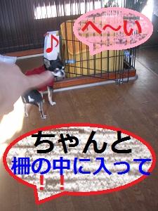 DSCN8263a.jpg