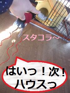 DSCN8268a.jpg