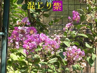 DSCN8409a.jpg