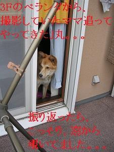 DSCN9104a.jpg