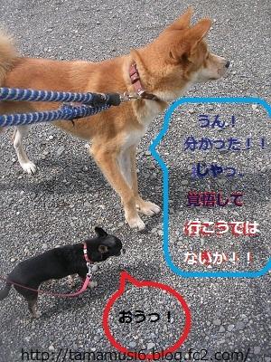 DSCN9313a_20121021172203.jpg