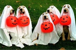 halloween_dog.jpg