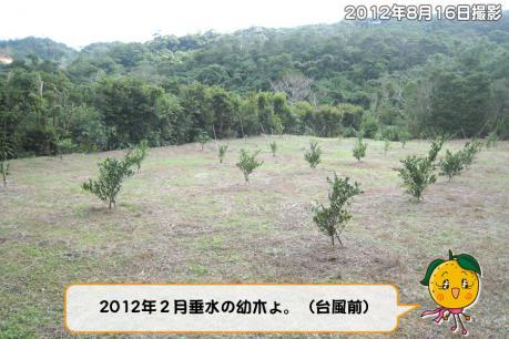 201211_003.jpg