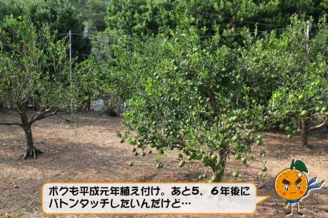 201211_005.jpg