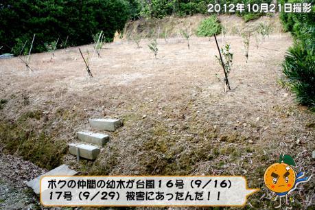 201211_006.jpg