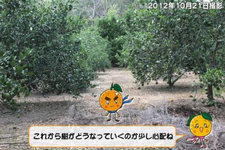 201211_007.jpg