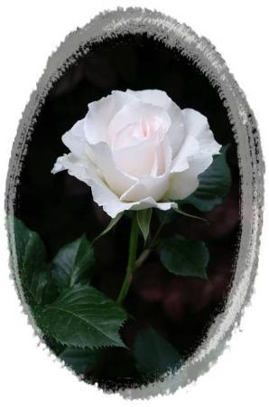 rose510 011