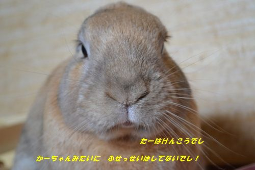007_20121008201427.jpg