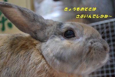 007_20121215111839.jpg