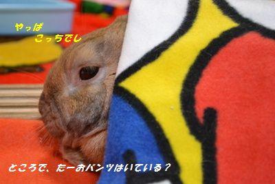 010_20121215111917.jpg