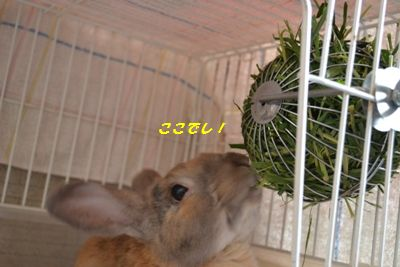 013_20120730173910.jpg