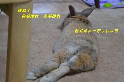 017_20130116202418.jpg