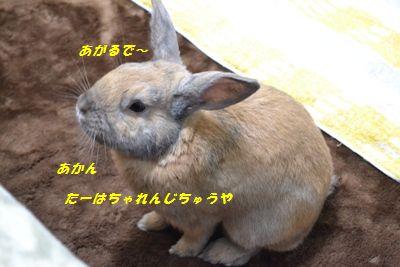 018_20121211192123.jpg