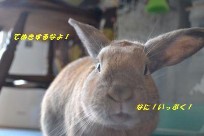 023_20121005193601.jpg