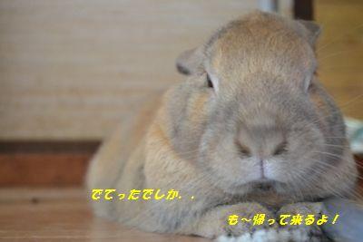 027_20120915115102.jpg