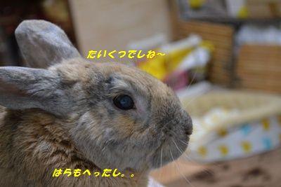 027_20121206135452.jpg
