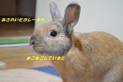 028_20121219154644.jpg