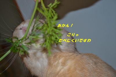 030_20121107130709.jpg
