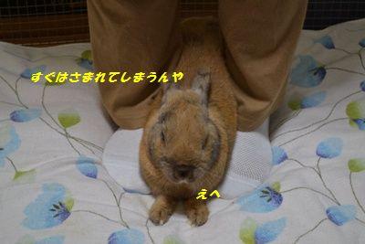 030_20130112201354.jpg