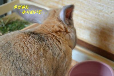 035_20120911160444.jpg