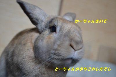 037_20121001151205.jpg