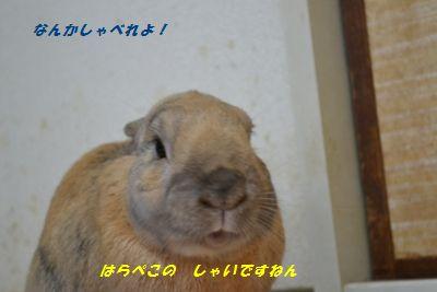 092_20121229183600.jpg