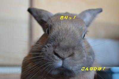 093_20120902120113.jpg
