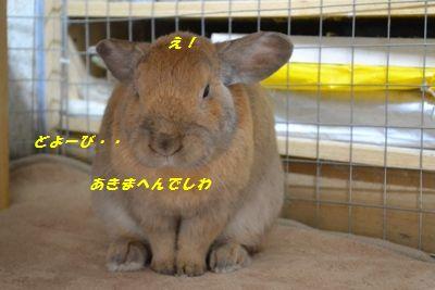 096_20121128151055.jpg