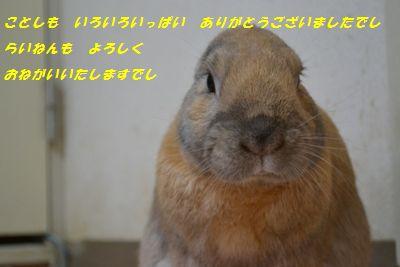 105_20121229183608.jpg