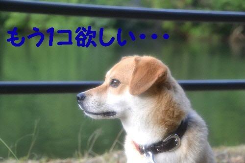 11_20120706010328.jpg