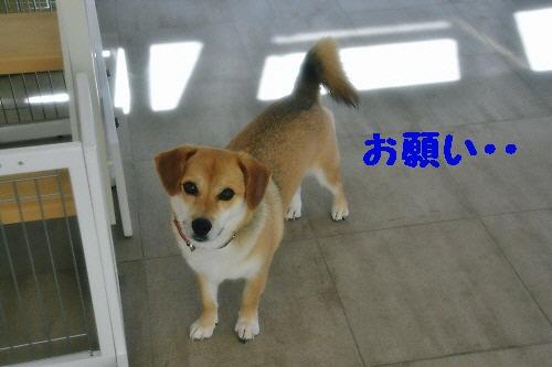 1_20120801232259.jpg