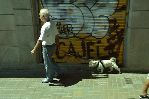 12バルセロナワンコ