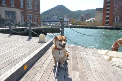 5門司港レトロの犬