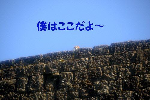 3_20121120235233.jpg