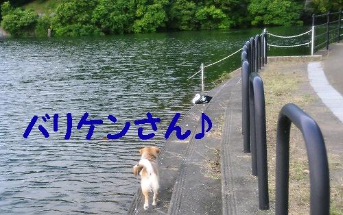 4_20120706010352.jpg