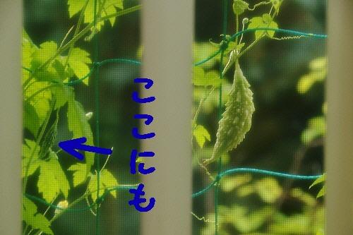 4_20120711220859.jpg