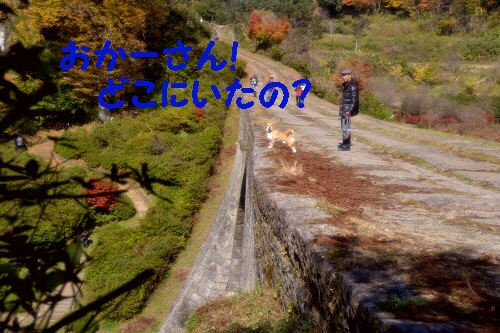 4_20121121220155.jpg