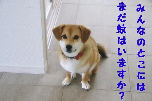 6_20121104221738.jpg