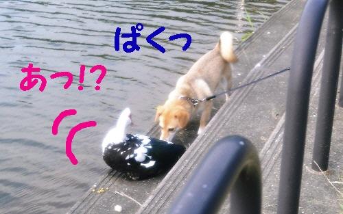 7_20120706010329.jpg