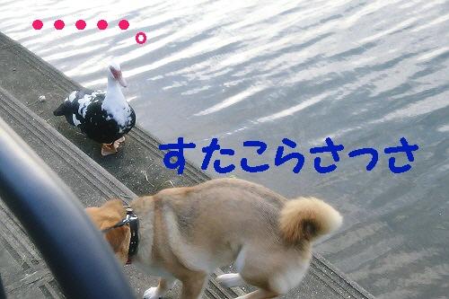 8_20120706010329.jpg