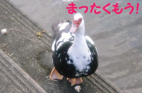 9_20120706010329.jpg