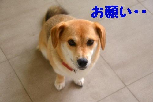 9_20120801234529.jpg