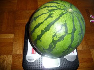 P1030715スイカの体重測定