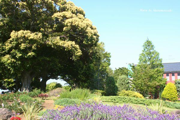 イギリス館庭園