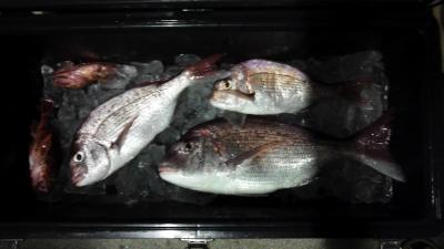 20120825釣果(おまけ付き)