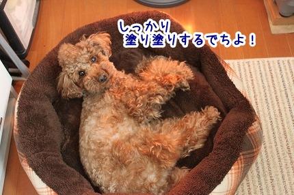 IMG_1104_20121206144257.jpg
