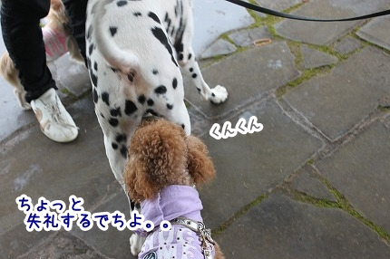 IMG_9579_20121005235435.jpg