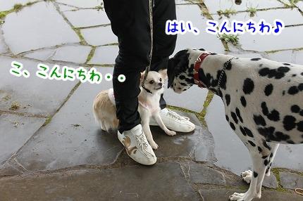 IMG_9582_20121005235522.jpg